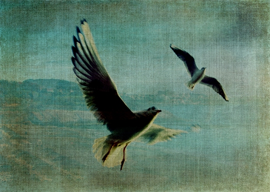 Wings over the World © Sarah Vernon